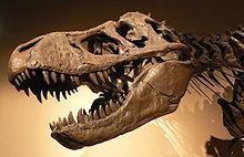 Arguements for evolution?